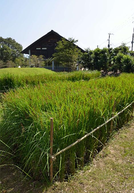 ricekaratsu