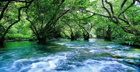 貴州省の南部の荔波県なる小七孔観光区。小七孔は山、水、森林、洞窟、湖から一体になっている。中にも水上森林は遠くから見ると繁茂した森はまるで水の中に漂っているようですが、近く行ってみたら、水面の石の上に大きな木がいっぱい植えていることがわかった。